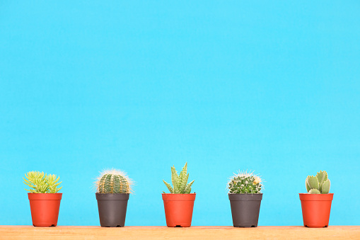 Cactus and succulents - gettyimageskorea