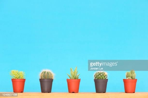 cactus and succulents - サボテン ストックフォトと画像