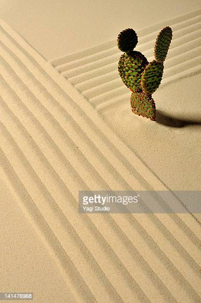 A cactus and wave pattern in the sand pit