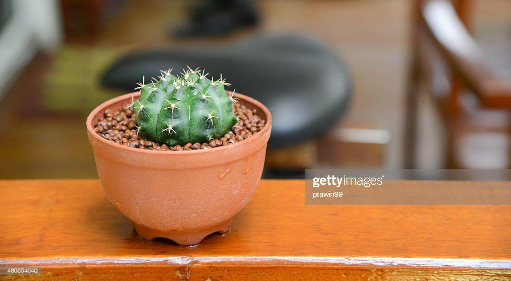 cactus fondo y decoraciones : Foto de stock