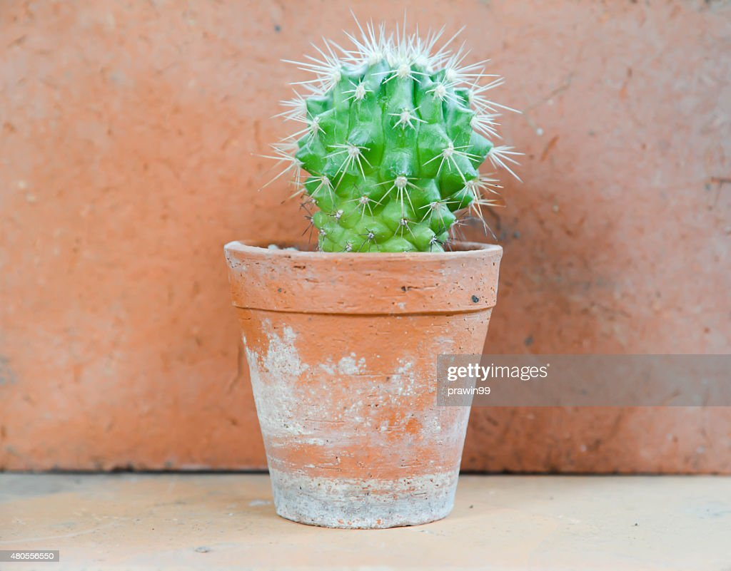 cactus background and decorated : Stock Photo