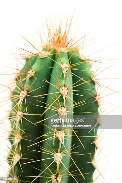 Cactus, close-up