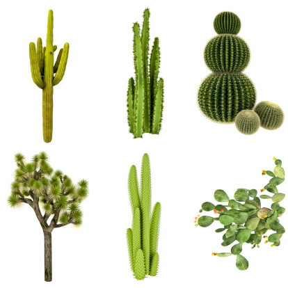 Cactus COLLECTION / SET Isolated on Pure White Background (72MPx-XXXL) 170024889