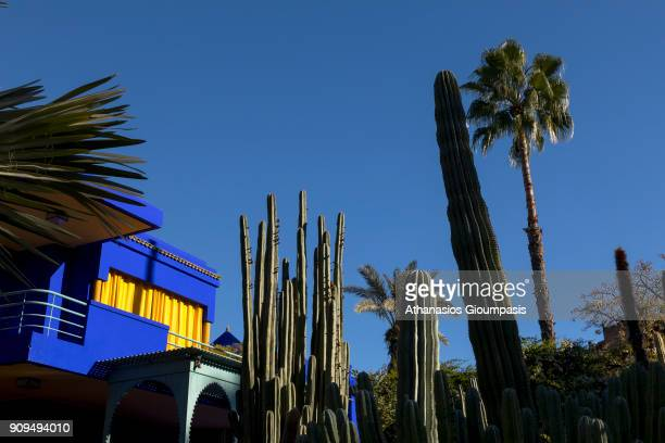Cactus collection with Villa in the background at the Majorelle Garden on January 04 2018 in Marrakesh Morocco The Jardin Majorelle in Marrakech is...