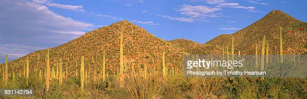 cactus covered hills - timothy hearsum fotografías e imágenes de stock