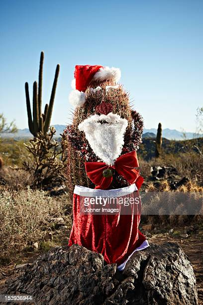cactus decorated as santa claus - arizona christmas stock pictures, royalty-free photos & images