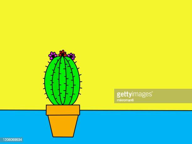 cactus drawing - two tone color stock pictures, royalty-free photos & images