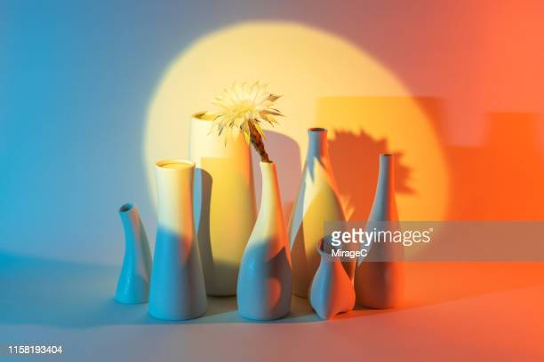 cactus flower in vase under a spotlight - still life stock pictures, royalty-free photos & images