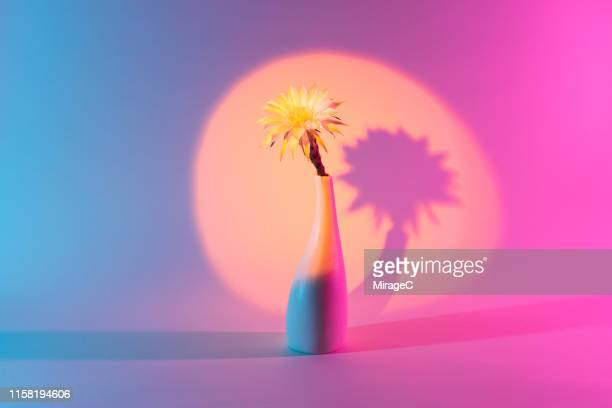 cactus flower in vase under a spotlight - spotlight stock pictures, royalty-free photos & images
