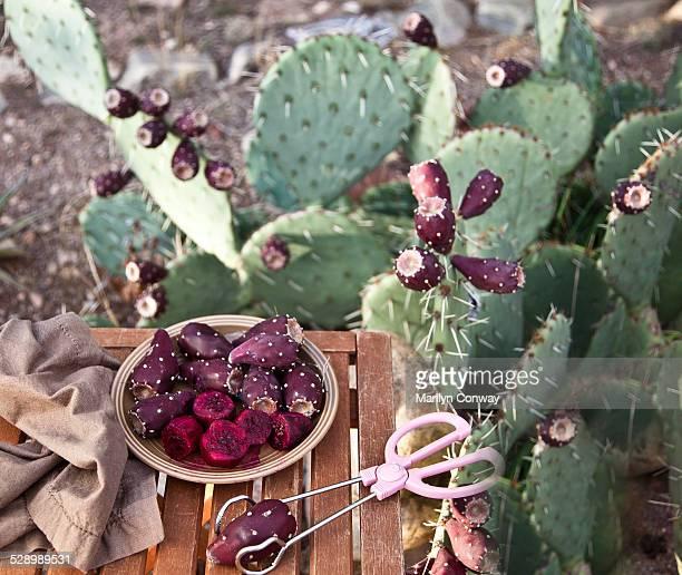 Cactus fruit and prickly pear cactus