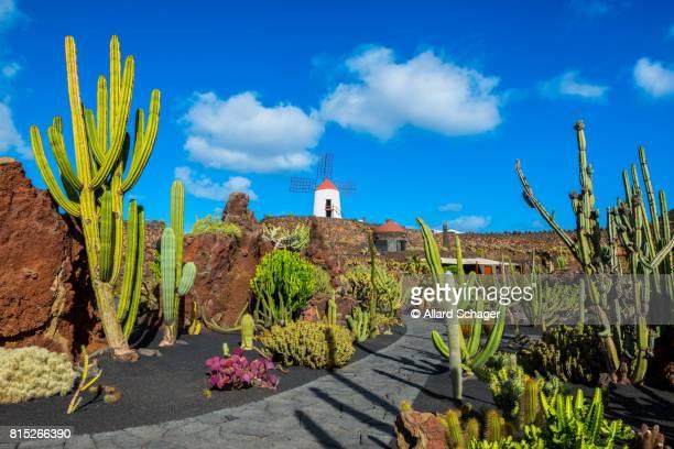 cactus garden in lanzarote - lanzarote stock pictures, royalty-free photos & images