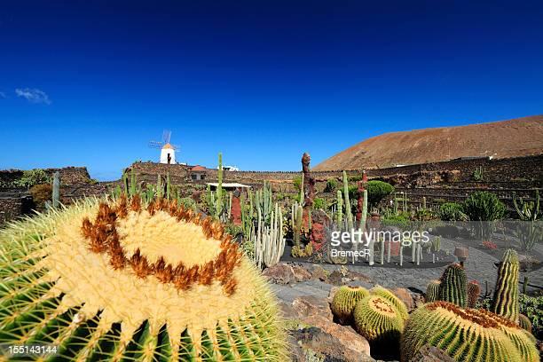 cactus al jardín - isla de lanzarote fotografías e imágenes de stock