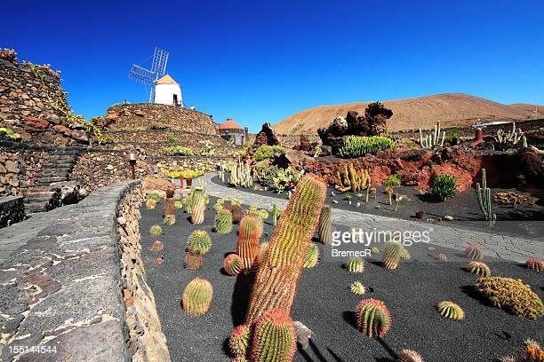 cactus garden - lanzarote stock pictures, royalty-free photos & images
