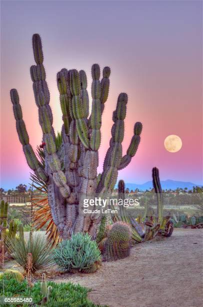 cactus garden - balboa park stock photos and pictures