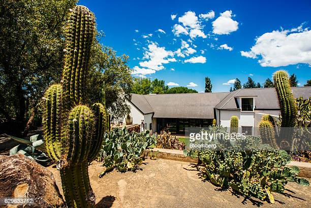 Cactus grow in the grounds of the Rietfontein ranch and stud farm in Karoo Colesberg South Africa on Thursday Dec 1 2016 Golfing legend Gary Player...