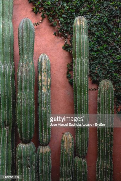 Cactus Growing Against Wall