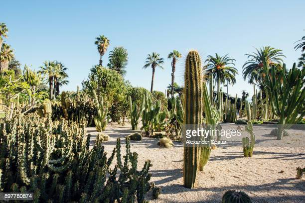 Cactus growing at Montjuic mountain, Barcelona, Catalonia, Spain