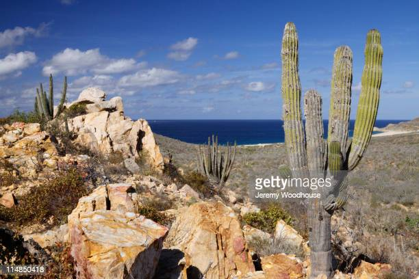 cactus growing near ocean - jeremy woodhouse stock pictures, royalty-free photos & images