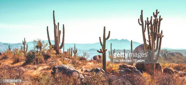 cactus growing on field against sky - arizona stock pictures, royalty-free photos & images