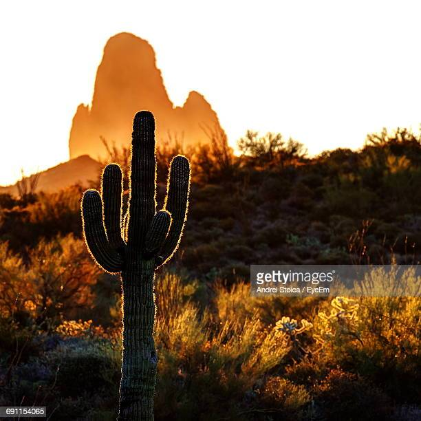 Cactus Growing On Field At Desert Against Clear Sky During Sunrise