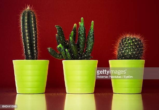 Cactus Growing On Pot Against Red Background