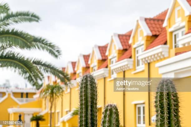 カリブ海の砂漠の島の住居の外壁の外で成長したサボテン - オランダ領リーワード諸島 ストックフォトと画像