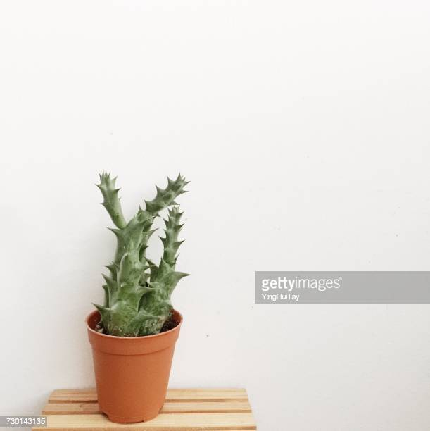 Cactus in a plant pot on wooden table