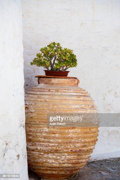 cactus in a pot in the street (hydra, greece) - mediterranean culture stock pictures, royalty-free photos & images
