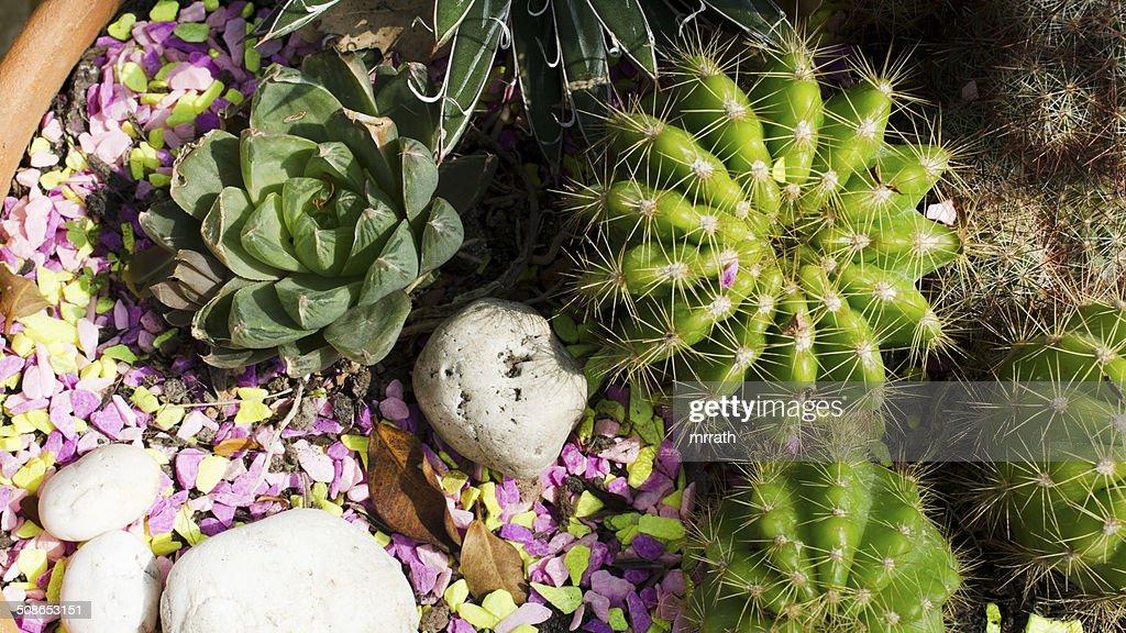 Cactus in pot closeup background stock photo : Stock Photo