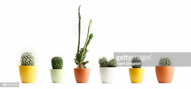 cactus in pots - cactus stock pictures, royalty-free photos & images