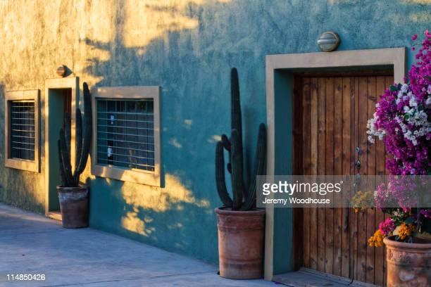 cactus in potted plants near wooden door - todos santos mexico fotografías e imágenes de stock