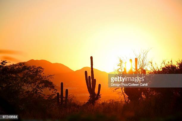 Cactus in the desert at sunset, Cabo San Lucas, Mexico