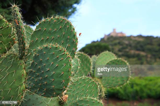 a cactus in the foreground - unsharp background with historic fortress (collioure/ languedoc-roussillon/ france) - collioure photos et images de collection