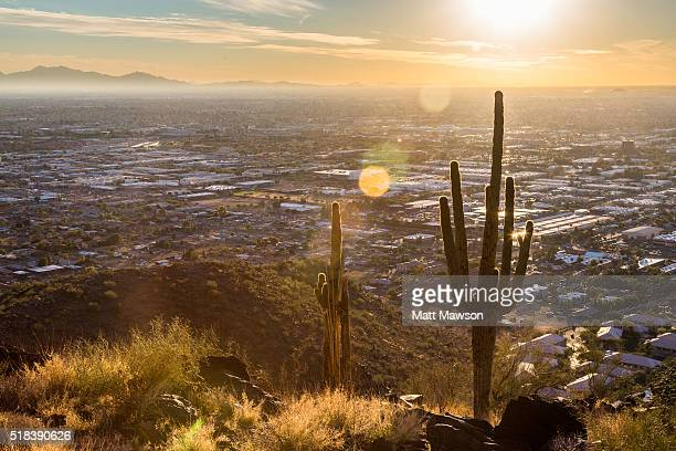cactus in the hills above phoenix arizona - phoenix arizona stock photos and pictures