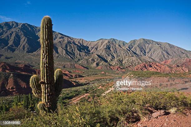 Cactus in the landscape of Cuesta de Miranda with the road Ruta 40, Andes, north of Árgentina, Argentina, South America
