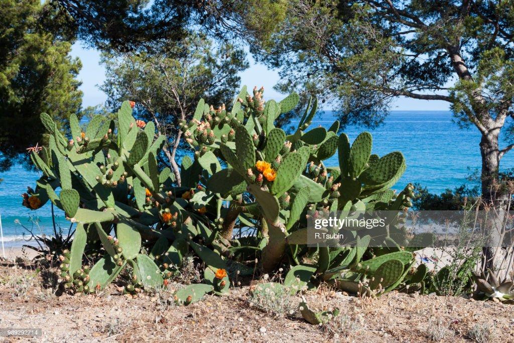 Cactus Nea Beautiful Small Beach On The Coast Of Costa ...