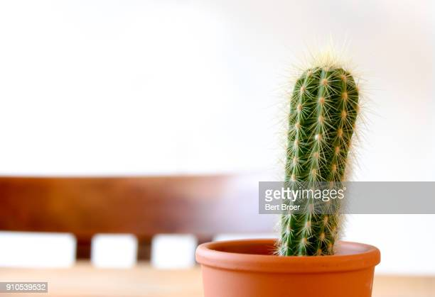 Cactus on a table