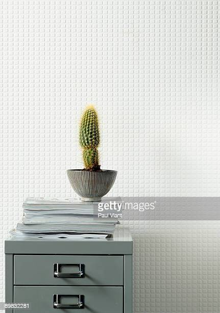 cactus on filing cabinet