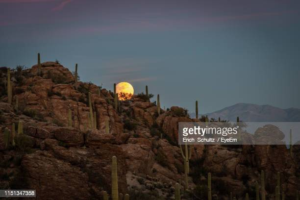 cactus on rock formation against sky during sunset - felsformation stock-fotos und bilder