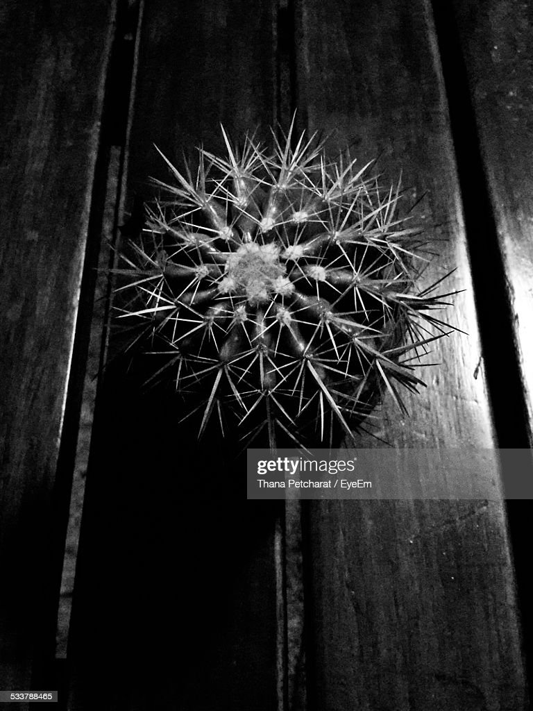 Cactus On Wooden Plank : Foto stock