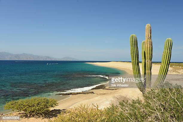 cactus plant and sandy beach on island in the sea of cortez on the baja california peninsula near la paz mexico - sea of cortez stock pictures, royalty-free photos & images