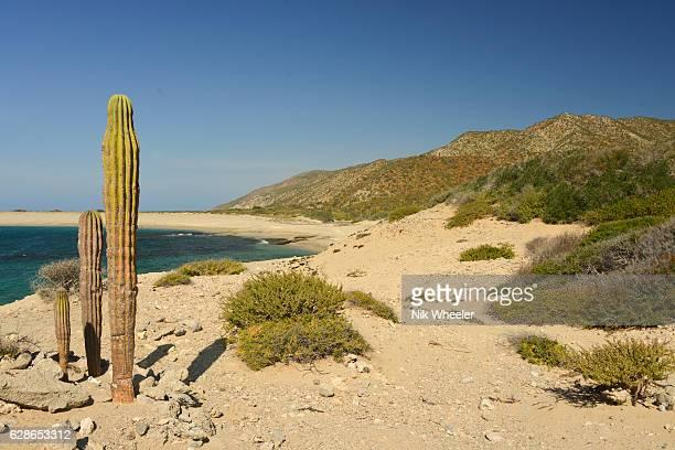 cactus plant and sandy beach on island in the sea of cortez on the baja california peninsula near la paz mexico - marina wheeler foto e immagini stock