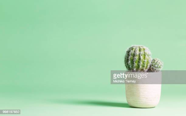 Cactus plant on a pastel background