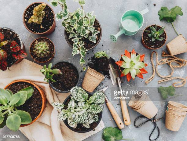 cactus plant with gardening tools - gardening equipment stock pictures, royalty-free photos & images