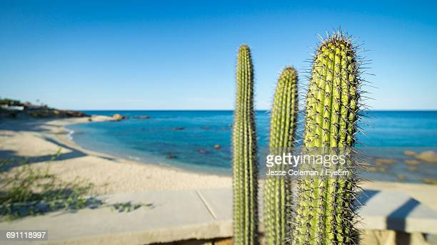 cactus plants growing against sea on sunny day - jesse coleman imagens e fotografias de stock