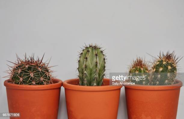cactus plants in pots - three objects stock pictures, royalty-free photos & images