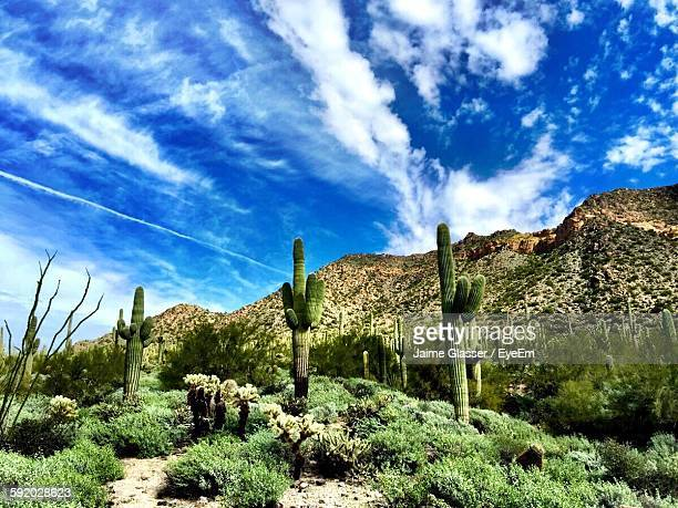 Cactus Plants On Landscape Against Blue Sky