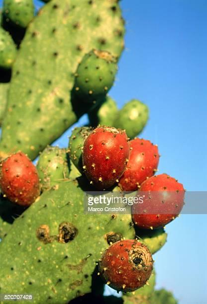 cactus, san miguel de allende, guanajuato, mexico - marco cristofori fotografías e imágenes de stock