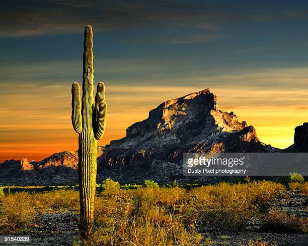 A cactus stands guard at Saddle Mountain