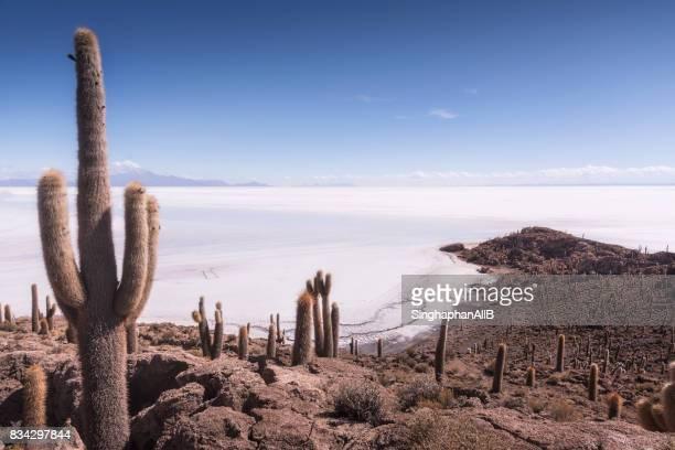 Cactus tree on Incahuasi or Cactus Island daytime, Salar de Uyuni, Bolivia
